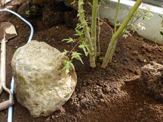 庭石の据えつけ