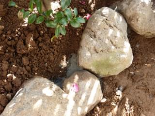 庭石の表情