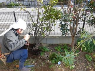 既存庭木の伐採・抜根