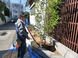 シマトネリコを植栽