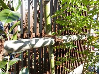 横方向の竹と植木を結束
