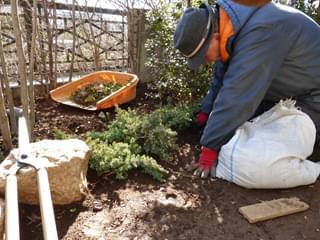 庭石組みと合わせるグランドカバー