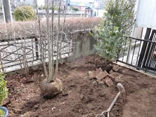 植栽の配置決め