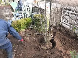 植栽作業の様子