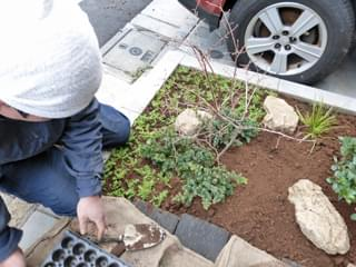 セダムやセキショウの植栽