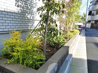 プリペットゴールドの植栽