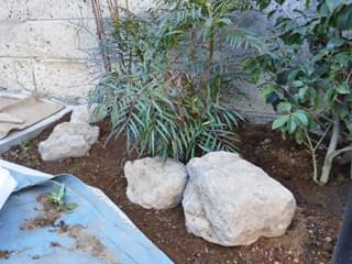 庭石が配石された様子