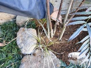 庭石と合わせる下草類