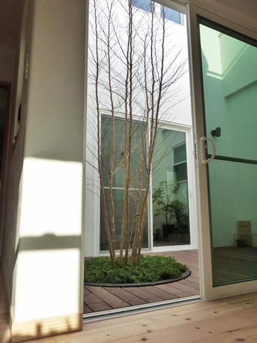 玄関より眺めた中庭