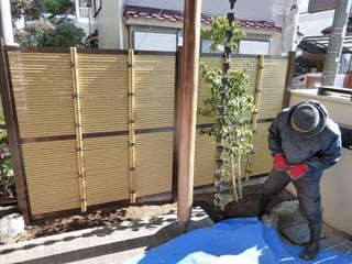垣根前の空間にソヨゴを植栽