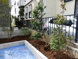 ソヨゴ・ヒメシャリンバイを植栽