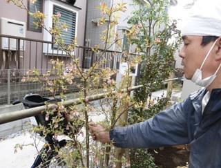 風留め竹に植栽を固定します