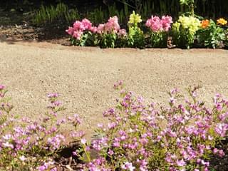 花の中を園路が進みます