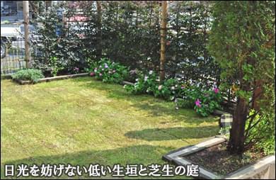 低い生垣で囲う明るい芝生ガーデン-江東区F様邸