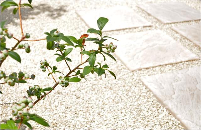 テラスでくつろぎ、果実も楽しむ庭
