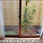 背景の人工竹垣が映える目隠しの人工竹垣が映える小さな日陰の庭-浦安市T様邸