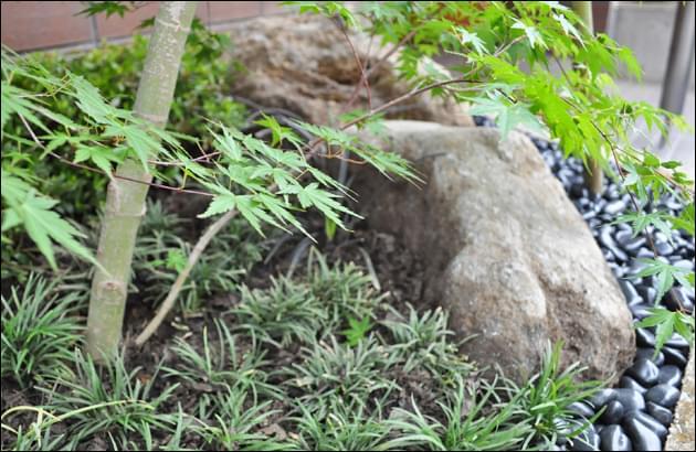 自然石に添えられるヤマモミジの枝葉