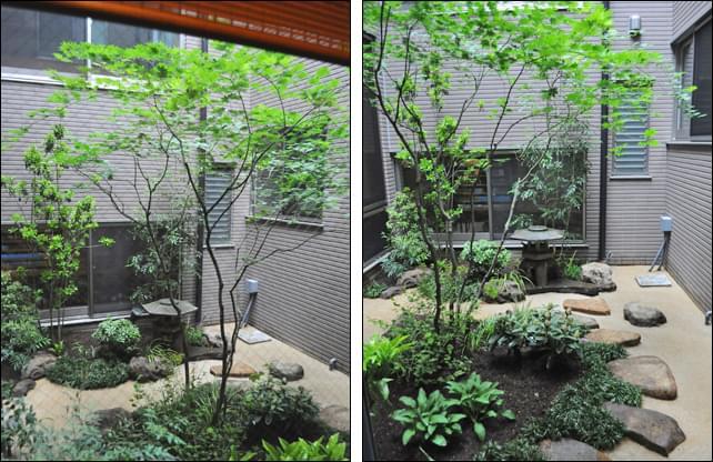 コハウチワカエデが瑞々しい坪庭の眺め