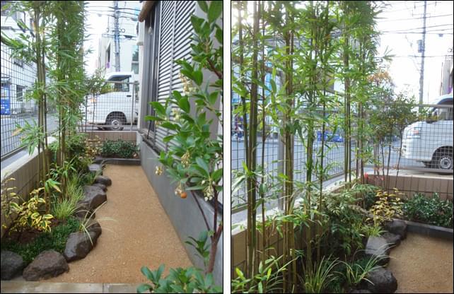 目隠しの生垣風に列植された大名竹