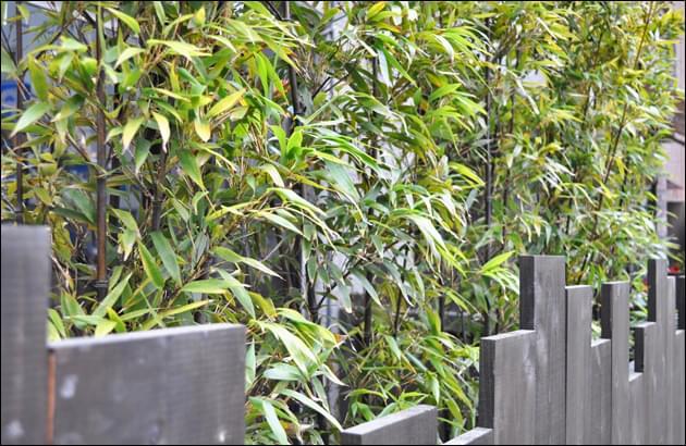 美しい黒竹の葉が飲食店を上品に演出