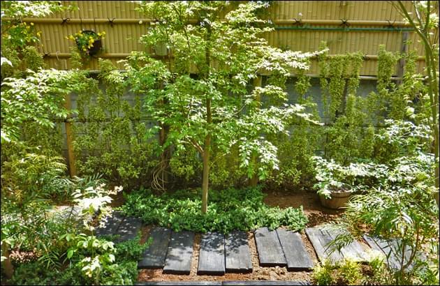 ヒメシャラやイロハモミジを植栽した様子