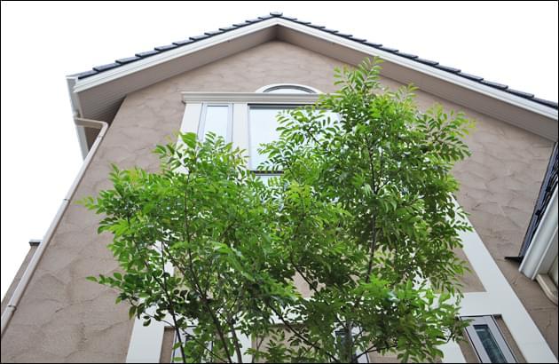 高窓から望める生長が楽しみな植木