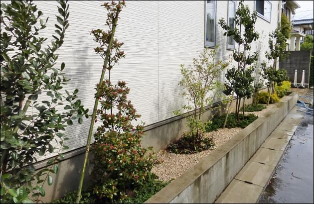 白壁を寂しく見せない常緑樹を中心に植栽