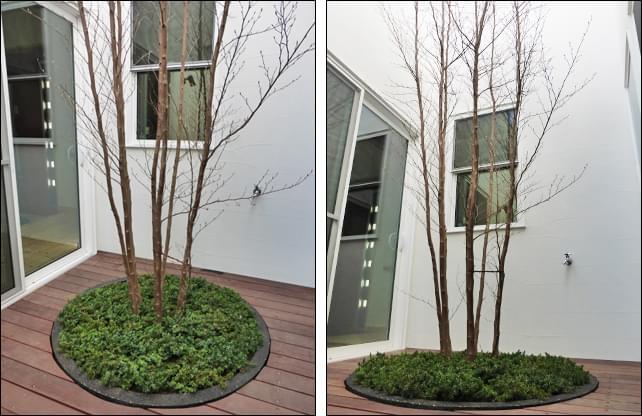 落葉樹とグランドカバーが馴染む植栽空間を