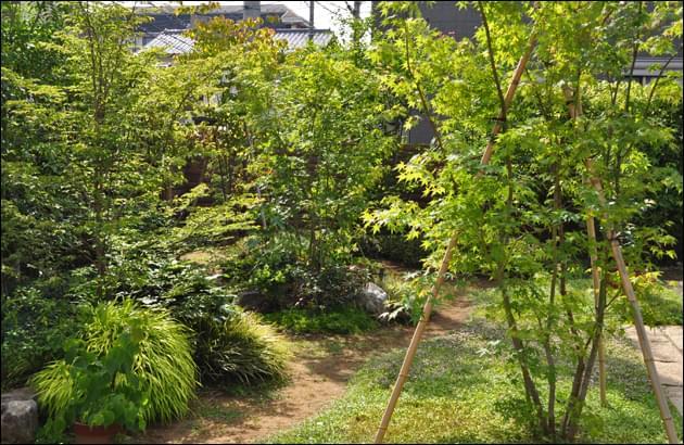 造園技法でレイアウトした植木