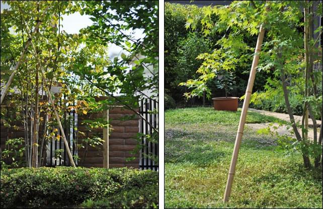 庭の中心にヤマモミジを植栽して遠近感を