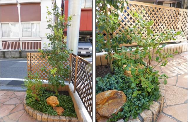 ソヨゴをシンボルツリーとした植栽レイアウト