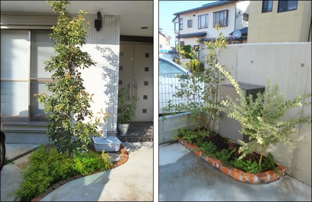 玄関前へ植栽されたシンボルツリー(常緑ヤマボウシ)