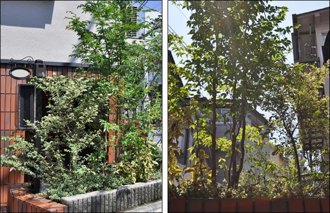 花壇それぞれの環境に合わせた植栽を