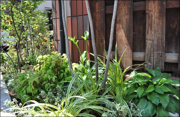 日陰でも育つ植物を選んでレイアウト
