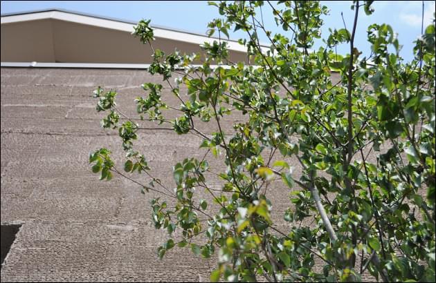 植木の枝葉がお住まいを優しい印象に