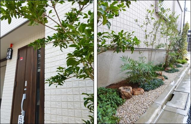 シンボルツリーは玄関へ寄り添う様に植栽