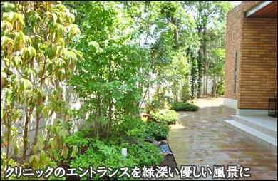 エントランスを植木の緑で鮮やかに-松戸市クリニック様