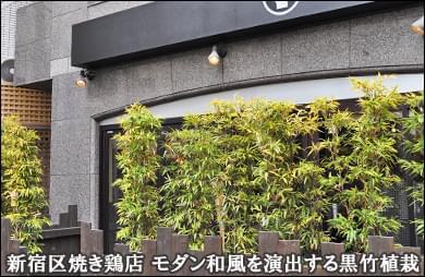 プランター植栽で黒竹が風になびく風景を-新宿区焼き鶏店