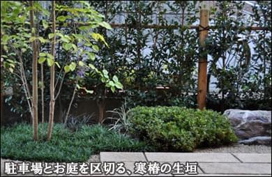 お庭と駐車場を区切る寒椿の生垣-千葉県船橋市