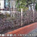敷地と道路を区切るトキワマンサクの生垣-浦安市