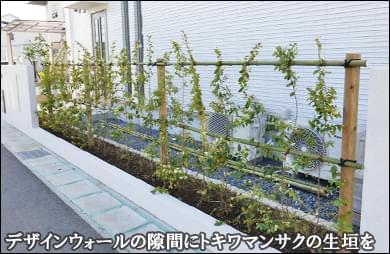 デザインウォールの隙間へ白花トキワマンサクの生垣を-野田市K様邸