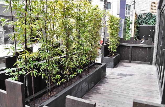 プランターへ黒竹を植えて生垣風に