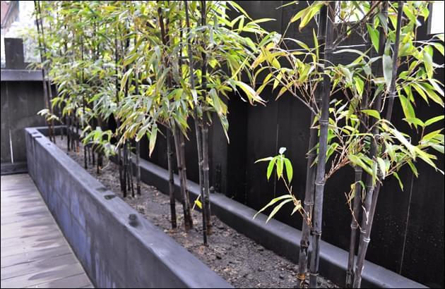 竹類は乾燥に特に注意が必要