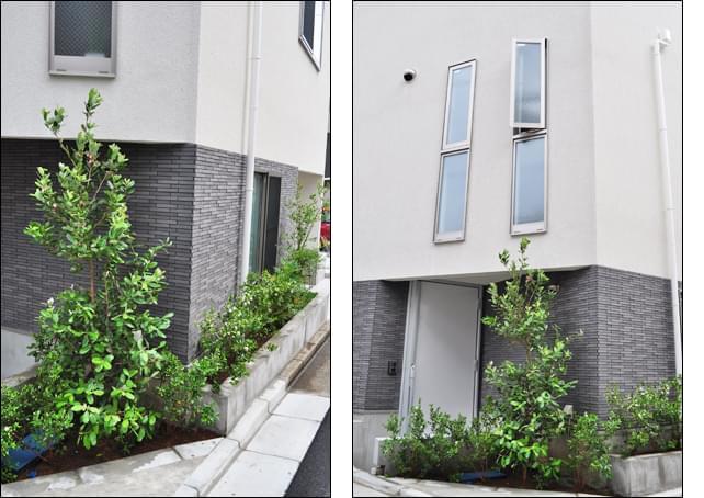 住まいと植木が融合した、庭としての風景
