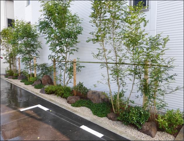 シマトネリコの植栽は均等にレイアウト
