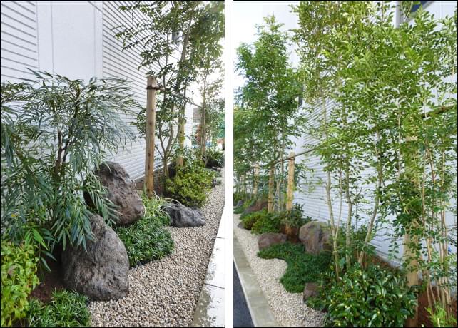 大小の自然石を柔らかく見せる植木の植栽群