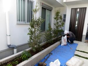 立ち木植栽が整った花壇