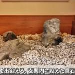 文京区H様邸 玄関内に設えた庭石の風景
