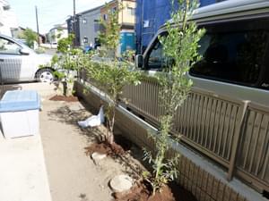 ポイントに配置した植栽