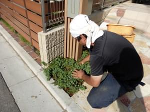 玄関前のグランドカバー植栽